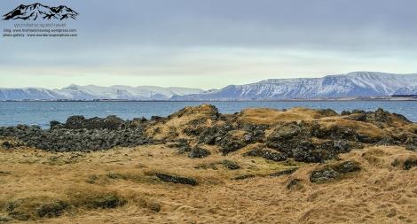 reykjavik coast